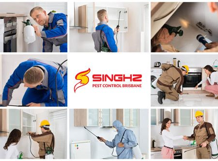 Pest Control Brisbane and Gold Coast